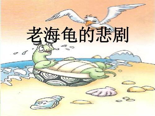 老海龟的悲剧