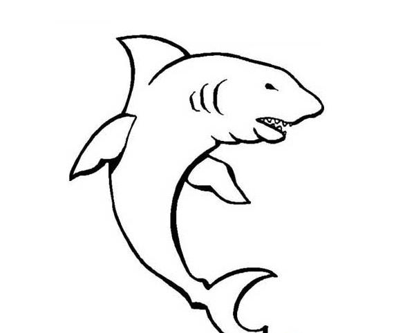 大鲨鱼简笔画图片 鲨鱼