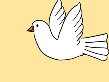 白色的和平鸽简笔画要怎么画?