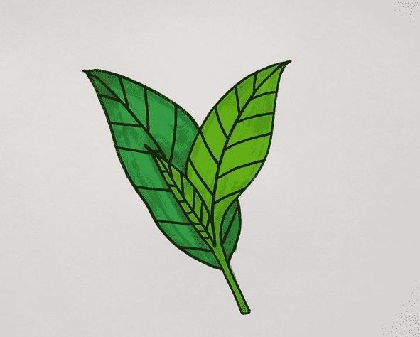 茶叶简笔画画法步骤教程