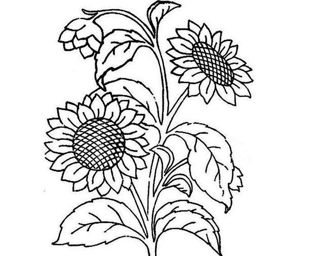 漂亮大朵的向日葵简笔画 向日葵简笔画