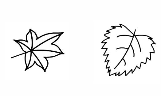 两片叶子简笔画
