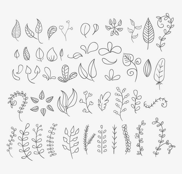 各种各样的植物叶子简笔画 树叶简笔画图片