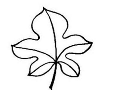 简单漂亮的枫叶简笔画 树叶简笔画