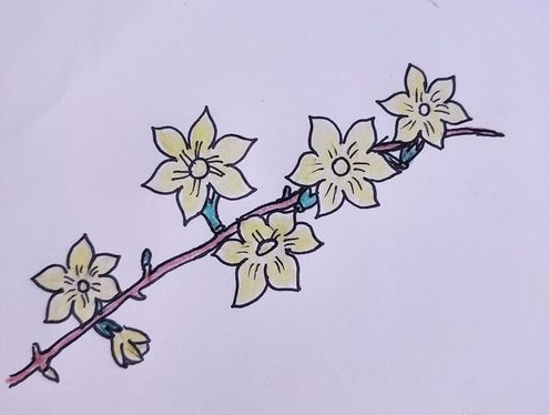 迎春花简笔画画法步骤教程