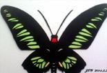 我剪的蝴蝶