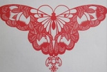 对称的花蝴蝶