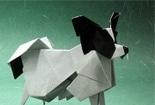 傲娇的蝴蝶犬